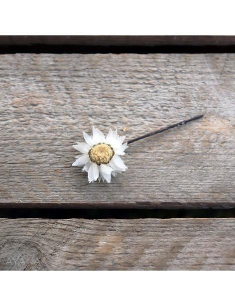 Pic-rodanthe-de-fleurs-eternelles