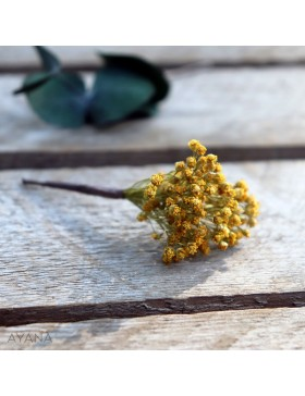 Pic-broom-de-fleurs-eternelles
