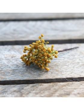 Pic-broom-en-fleurs-eternelles