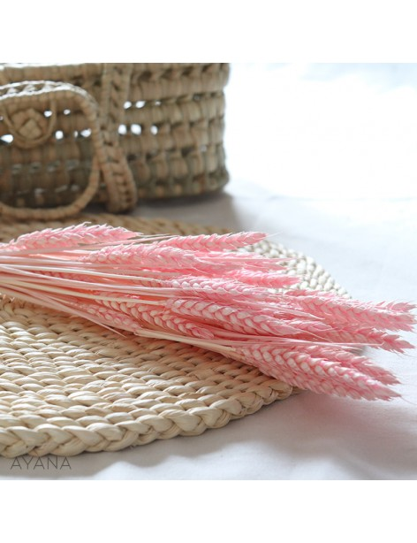 Bunch of dried pink wheat