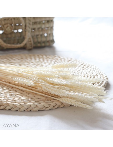Bunch of dried white wheat