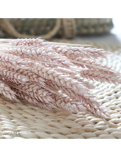 Botte de ble seche couleur beige rose