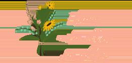 fleurs naturelles durables